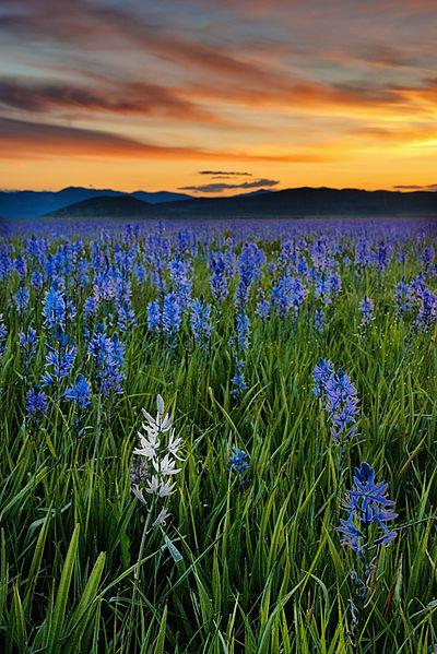 flowers on prairie