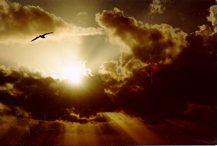 bird in sunset santa cruz