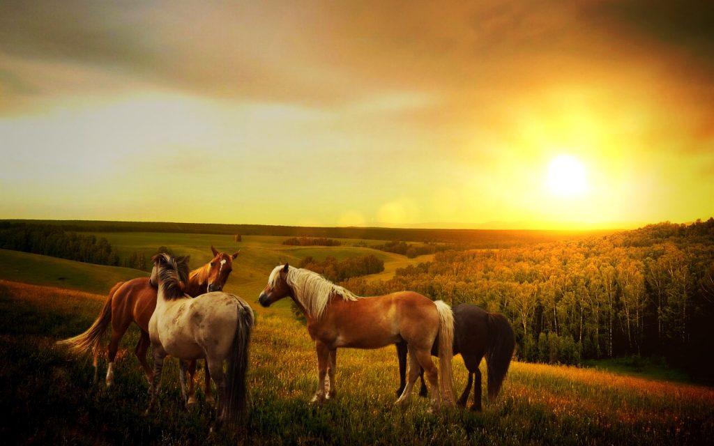 horses-in-nature